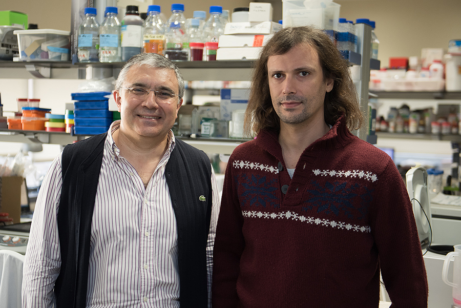El Dr. Francisco Lozano (a la izq.) y el Dr. Mario Martínez-Florensa Fuente: Hospital Clínic