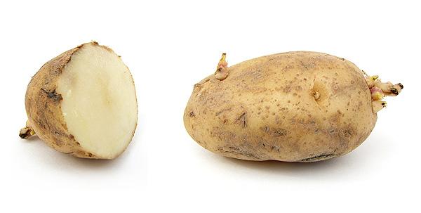 Patatas Autor/a de la imagen: ZooFari (Own work)  Fuente: Wikipedia