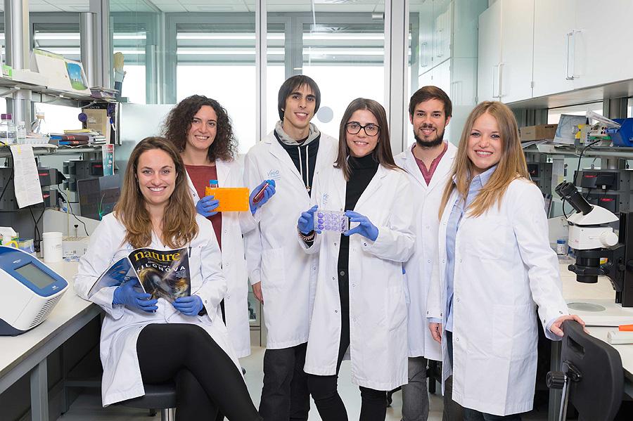 Grupo de Plasticidad Celular y Cáncer del Vall d'Hebron Institut d'Oncologia (VHIO) Autor/a de la imagen: Katherin Wermke Fuente: VHIO / Galènia