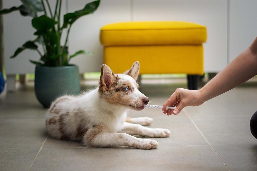 Hay más de un proyecto de vacuna antiCOVID para mascotas, pero los sueros tardarán aún algún tiempo en llegar al mercado